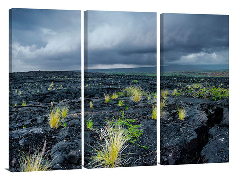 New growth in the lava fields on the Waikaloa coast of the Big Island of Hawaii.