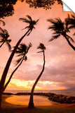 Curvy Palms Photographic Print On Canvas By Sean Davey