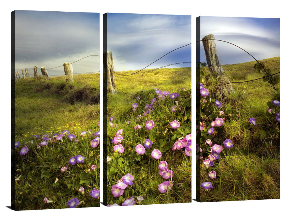 Fence Line and Morning Glory Flowers Photographic Print On Canvas By Dennis Frates