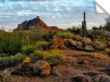 Red-Mountain-Bloom-Fountain-Hills,-AZ_c