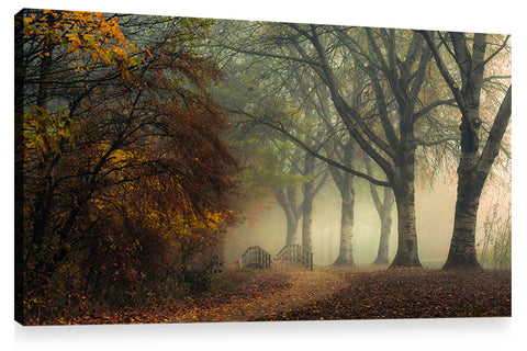 LAST COLORS OF FALL, Ready-to-Hang Photographic Print On Canvas