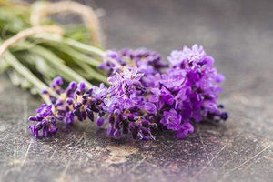 LAVENDER ESSENTIAL OIL - Totally Refreshed Steam and Spa
