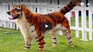 World's RAREST Dog Breeds Ever!