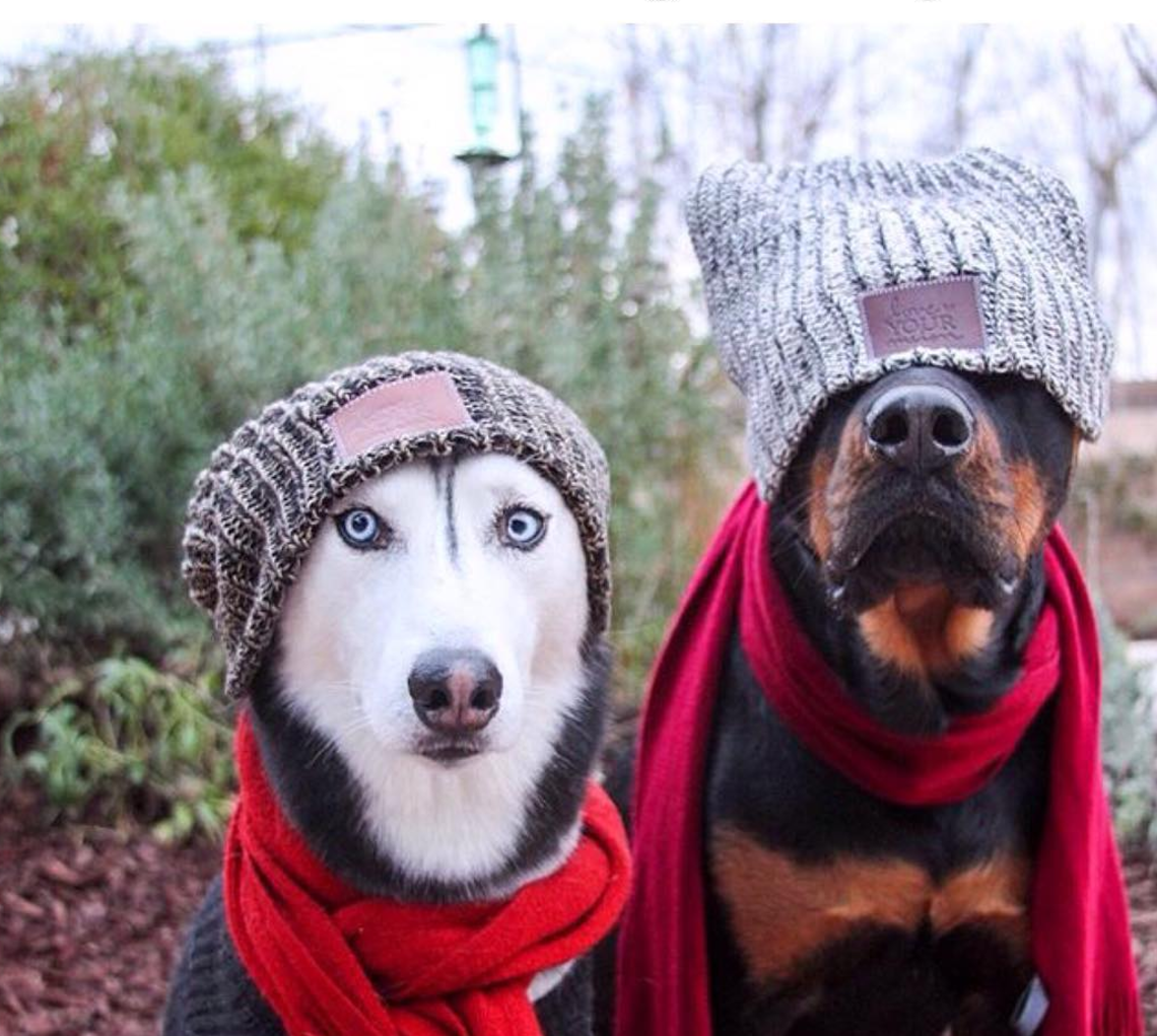 522fb3c1dcf 27  That hipster phase you and your friend went through in college. dog hat  meme