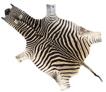 Authentic Cruelty-Free Super Grade A Zebra Skin from South Africa