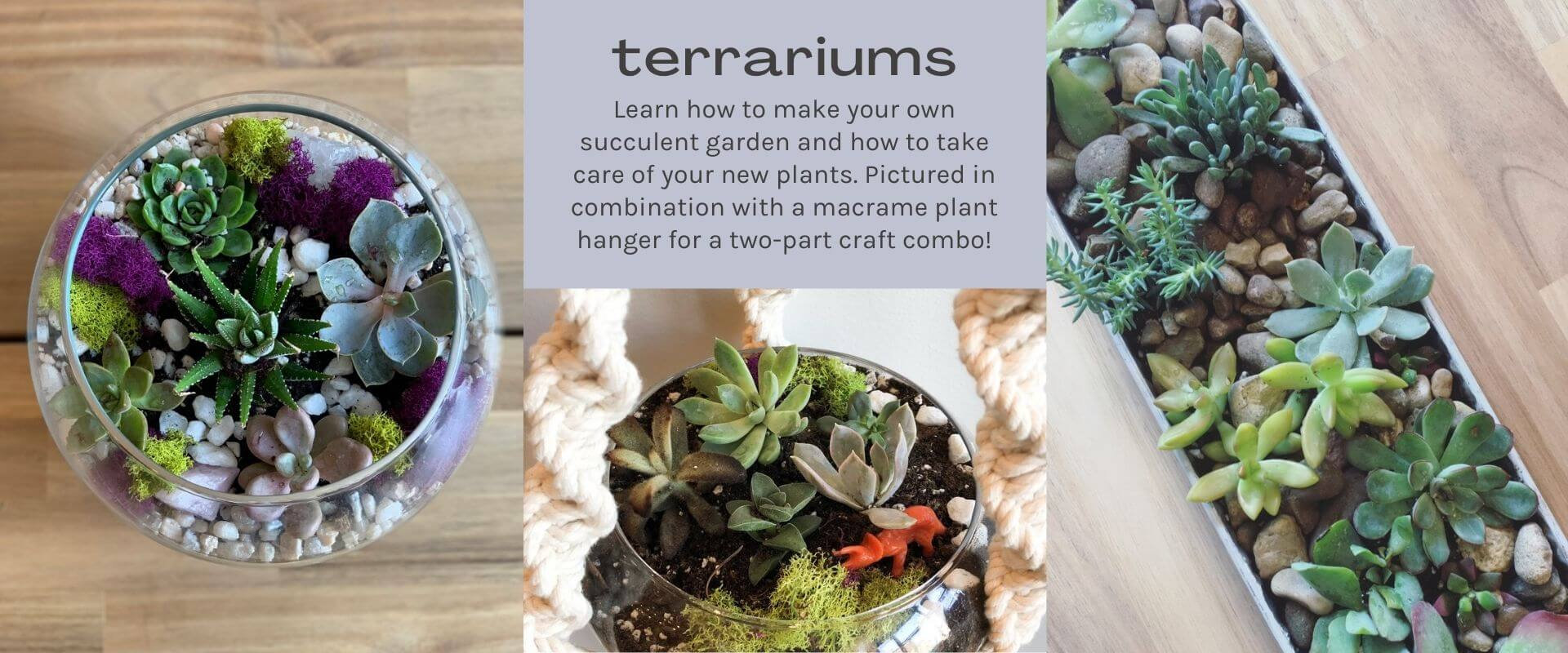 text-terrariums image-green succulents rocks and moss in containers