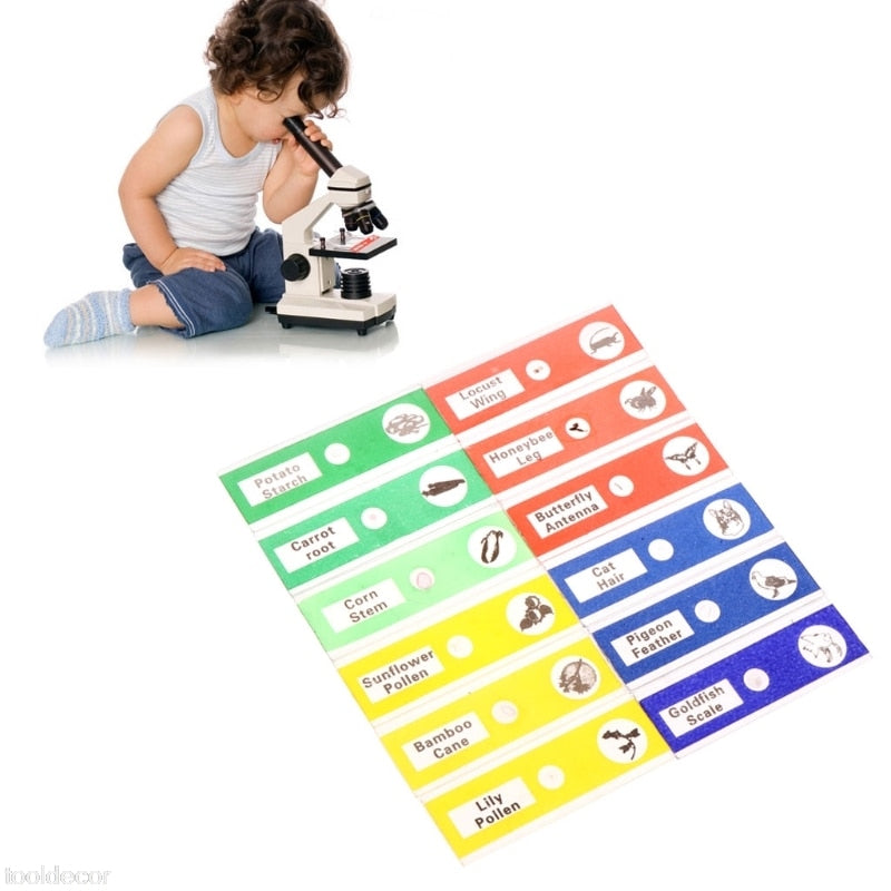 12Pcs Prepared Microscope Slides Set Specimen For Student Basic Biology Education -B119