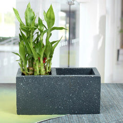 homelux planter & stationary holder