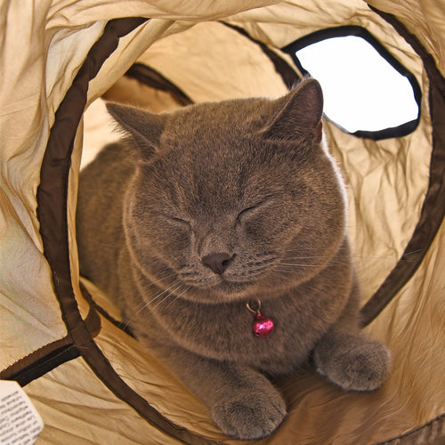 Fun Cat Tunnel Toy with 2 Windows - Endless Adventure! - Heavy Metal Jewelry Clothing