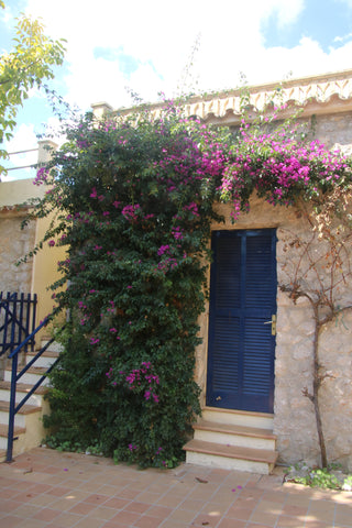 Fina, Mallorca with beautiful flowers