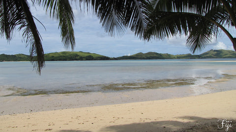 Image of Fijian beach and palm trees