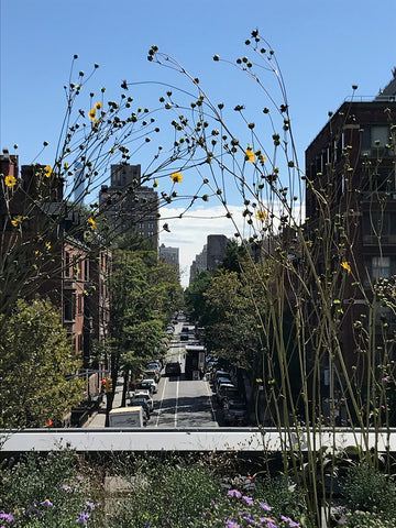 View through the flowers on the high line to the city streets
