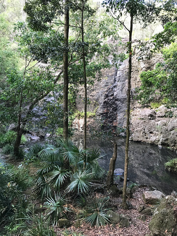Queensland Jungle, Australia
