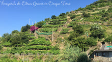 Vineyards and Citrus Groves in Cinque Terre - Taylor Benfield Luxury Scented Citrus & Lemongrass Candle