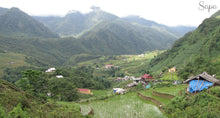 Rice paddies in Sapa, Vietnam - Taylor Benfield Luxury Scented Crimson Rose & Oud Candle