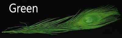 10Pcs Multicolor Peacock Feathers For Fly Tying Nymphs Wet Flies Fishing-Fly Tying Materials-Bargain Bait Box-Green 10PCS-Bargain Bait Box