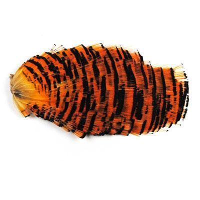 Natural Complete Golden Pheasant Head And Crest Fly Fishing Fly Tying Feather-Fly Tying Materials-Bargain Bait Box-Tail section-Bargain Bait Box