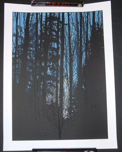 Dan McCarthy A Night in the Forest Art Print Glows In The Dark 2010 S/N