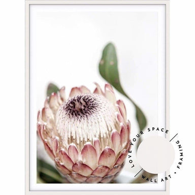 Protea II - Love Your Space