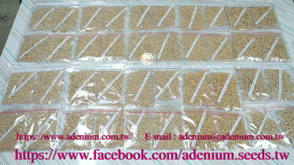 Adenium seeds in Taiwan.