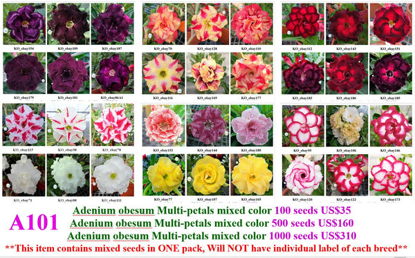 A101. Adenium Multi-petals mixed color Seeds