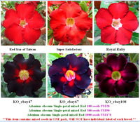 Adenium Single-petal mixed Red