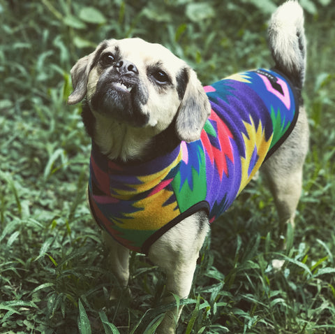 Pawtagonia dog fleece sweater