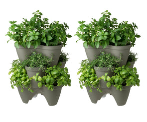 Ivy Planter 6 Pack