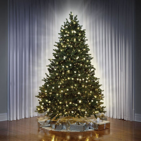 Dual Light Balsam Fir Tree
