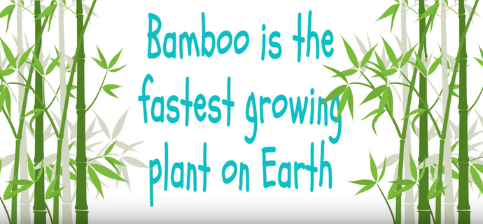 Bamboo is perfect for babies and children