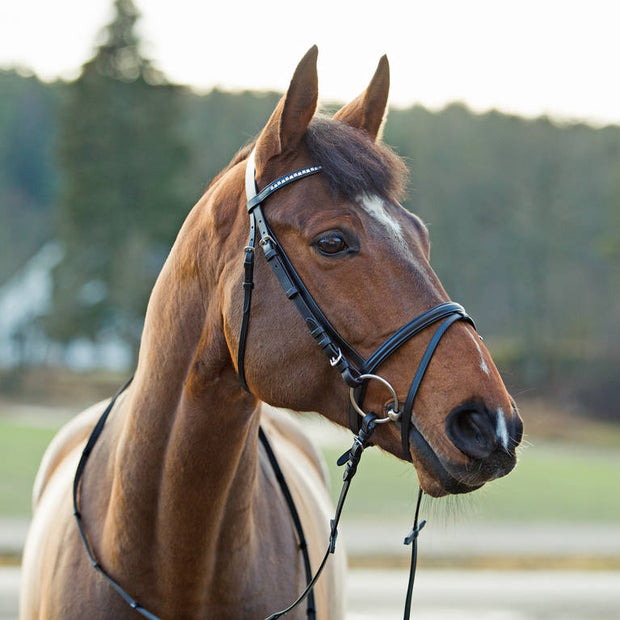 Weston Bridle