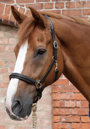 PEI Padded Leather Headcollar