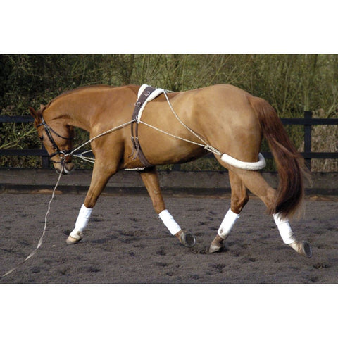 Lunging Training Aid