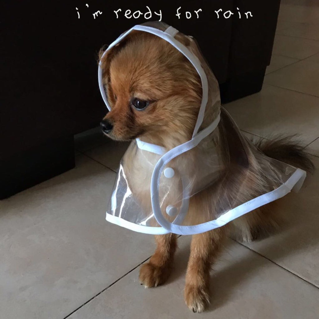 Transparent Waterproof Dog Raincoat