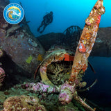 Solomon Islands Wreck Trip 2020!