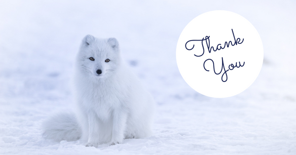white fox thank you metal stainless steel straw