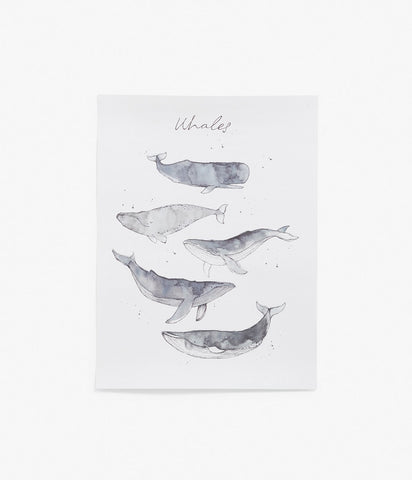 Whale print poster