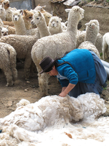 Sustainable jumpers from Alpaca wool