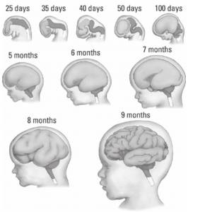 The Most Important Nutrient For Baby Brain Development During Pregnancy
