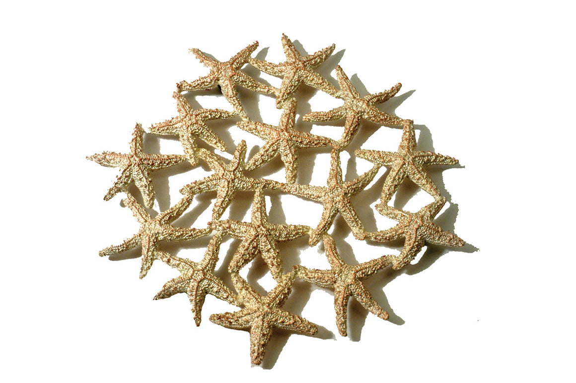 Starfish Trivet - Gold over Silver Finish