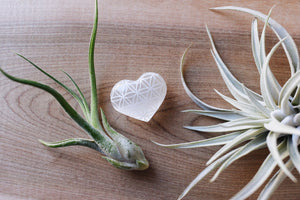 "Etched Selenite Heart ""Flower of Life"" - Wholesale"