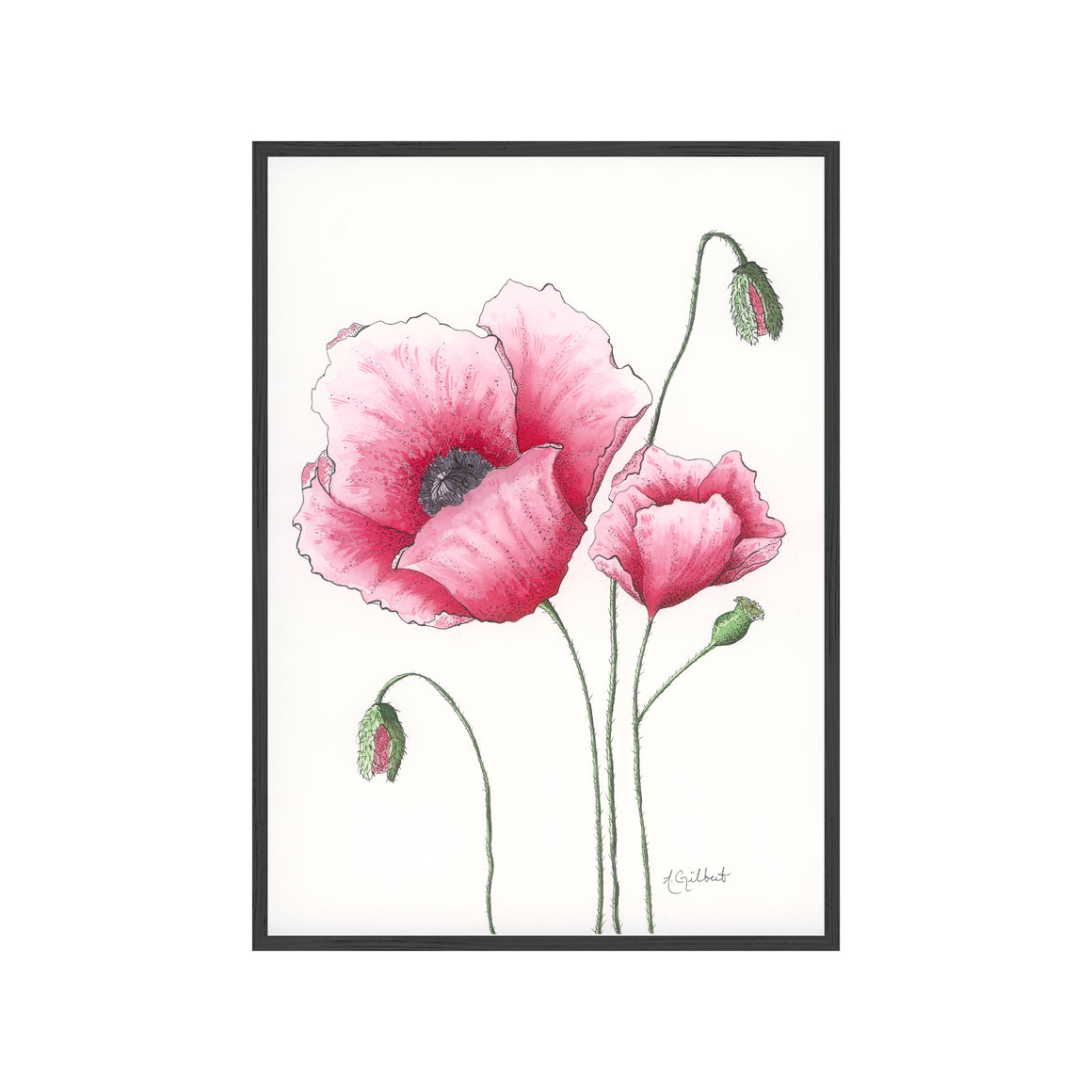 PINK POPPIES Fine Art Watercolor Print