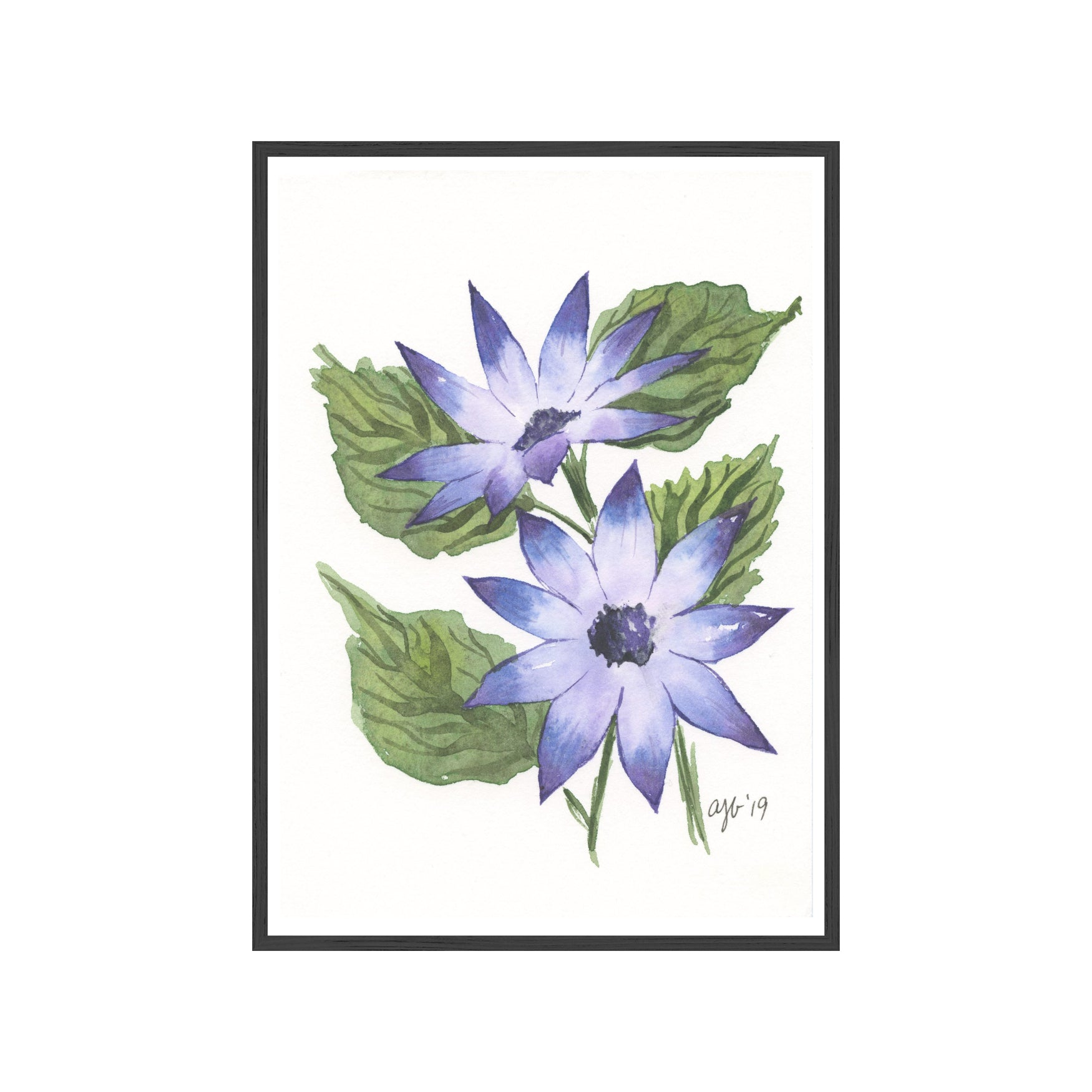 BLUE FLORAL CINERARIA Fine Art Watercolor Print (Small)