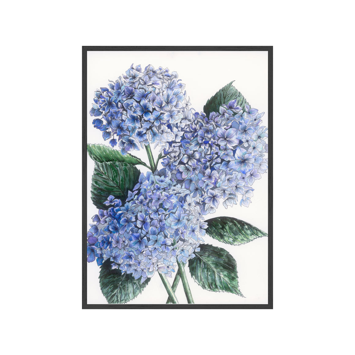 BLUE HYDRANGEAS Fine Art Watercolor Print