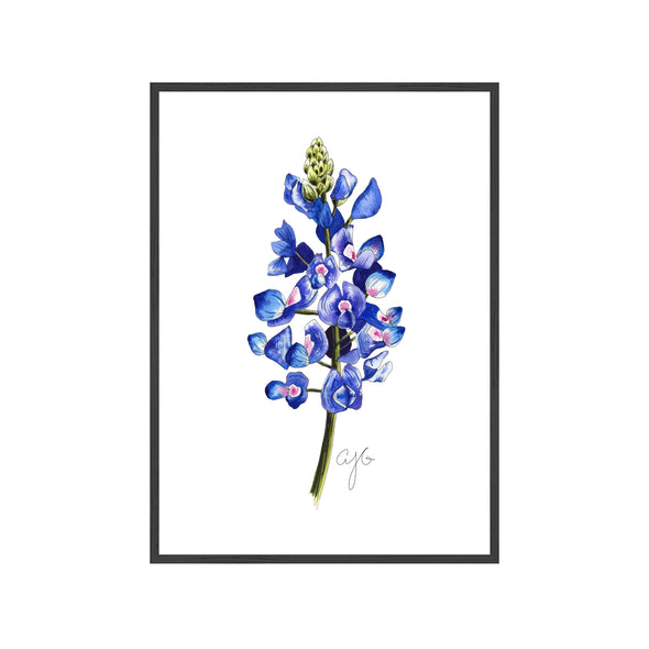 TEXAS BLUEBONNET Fine Art Watercolor Print