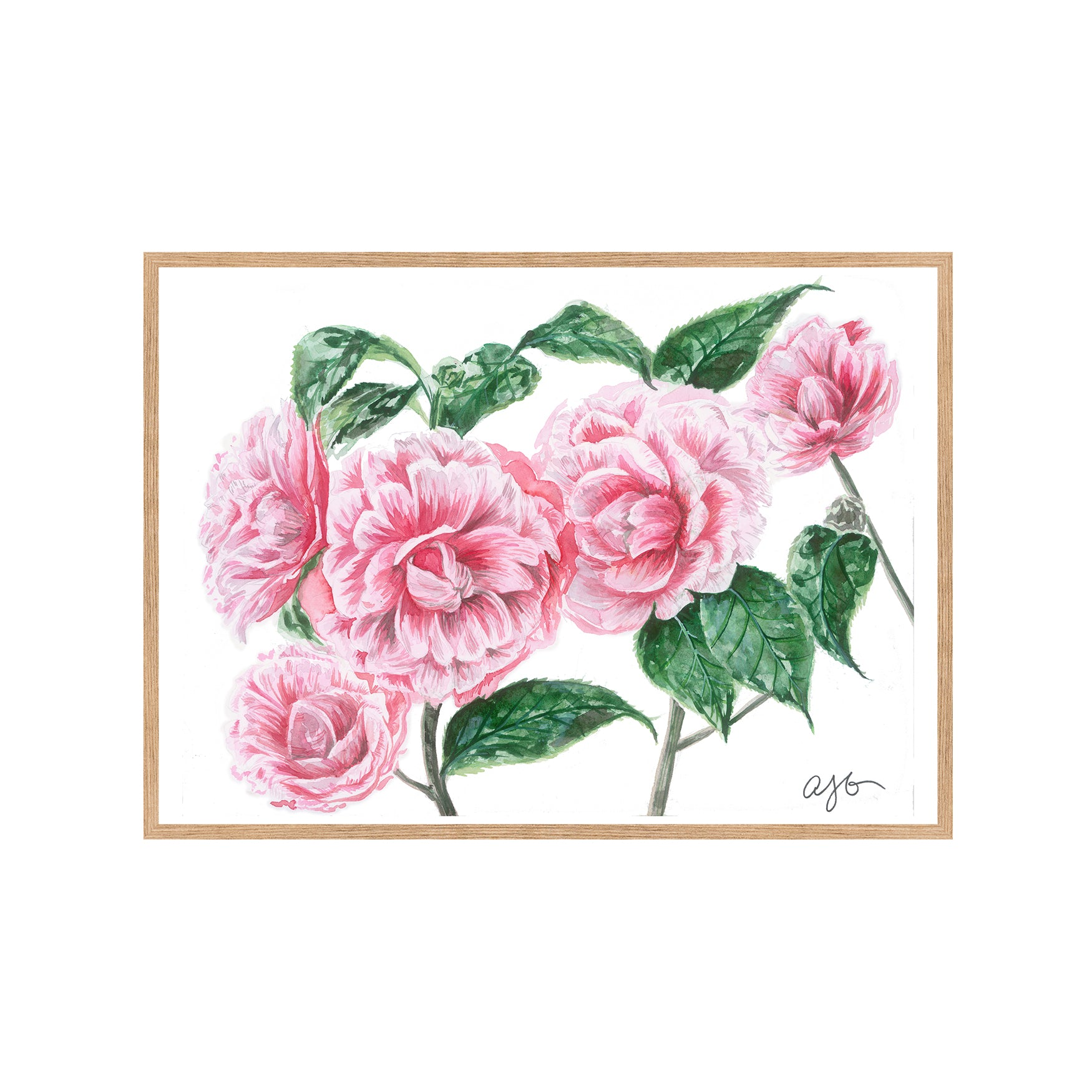 CAMELLIAS Fine Art Watercolor Print