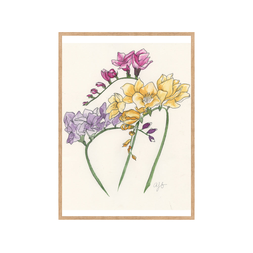 TRI-COLOR FREESIA Fine Art Watercolor Print