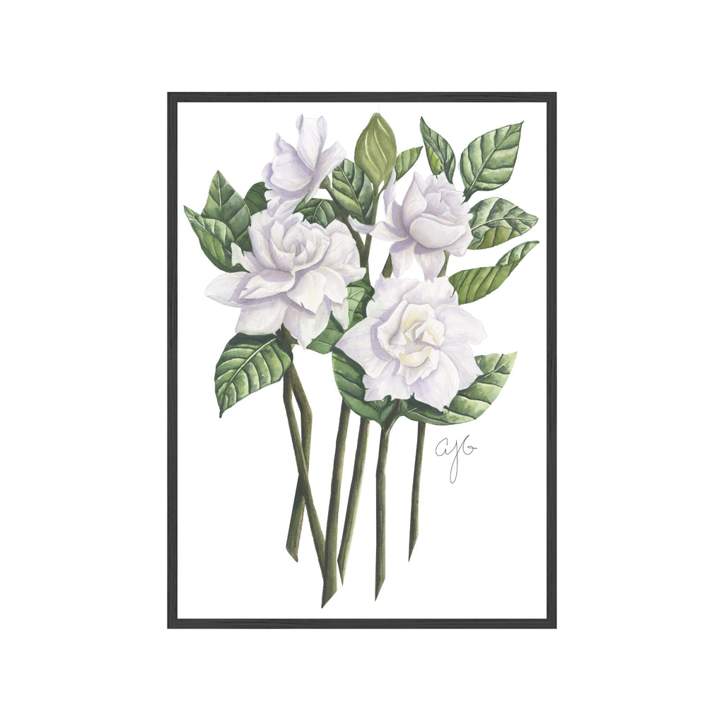 GARDENIAS Fine Art Watercolor Print