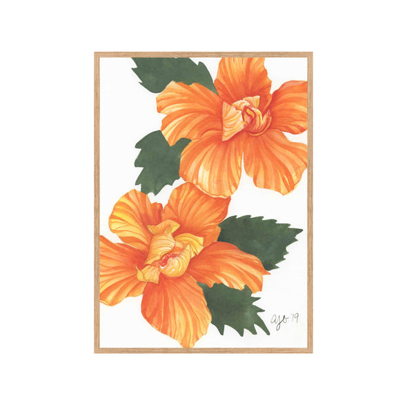 ORANGE HIBISCUS Fine Art Watercolor Print