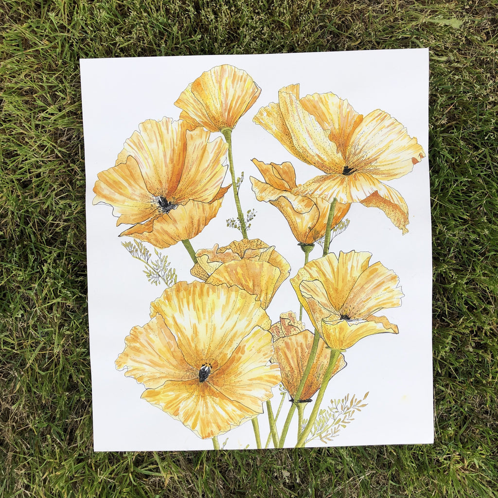Yellow Poppies : Watercolor and Ink